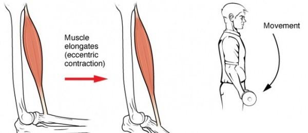 Tratamiento de fisioterapia para las roturas fibrilares