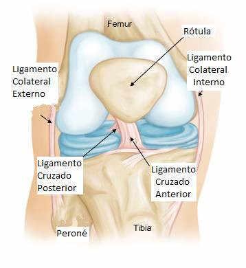 anatomía del ligamento cruzado anterior de rodilla