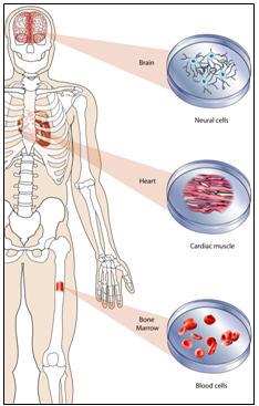 historia de células madre Tratamientos terapias biológicas